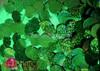 CHARISMATICO Classic Showgirl's Green Jumbo glitter sequin fringe Latin Dance Leotard