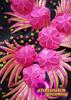 CHARISMATICO Attractive fuchsia ad black floral designed ultimate dancing queen dress