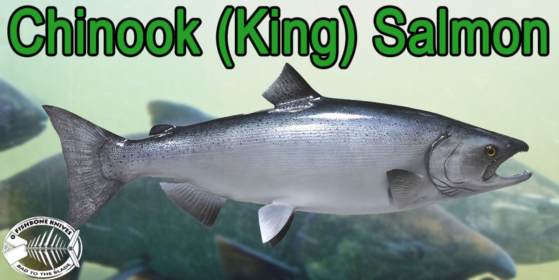 Chinook (King) Salmon