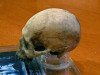 Terminator 3; Rise of The Machines, Real Prop Skull