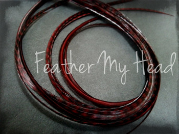 Hair Feather Extensions -Premium Grade Euro Feathers - Select Length And Style Feather - Espresso Brown