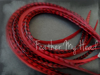 Feather Hair Extensions 9 - 12 Inches Long (23-30cm) Thin Fashion Euro - Grizzly Stripe And Solid Mix - 10 Pc Deep Red