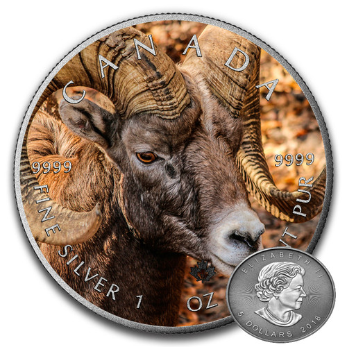 BIGHORN SHEEP - CANADIAN WILDLIFE SERIES - 2016 1 oz Pure Silver Canadian Coin - Color & Antique Finish