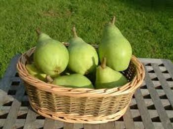 Pears- NZ Clapps Favourite - per kg