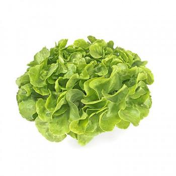 Lettuce - Hydroponic Each