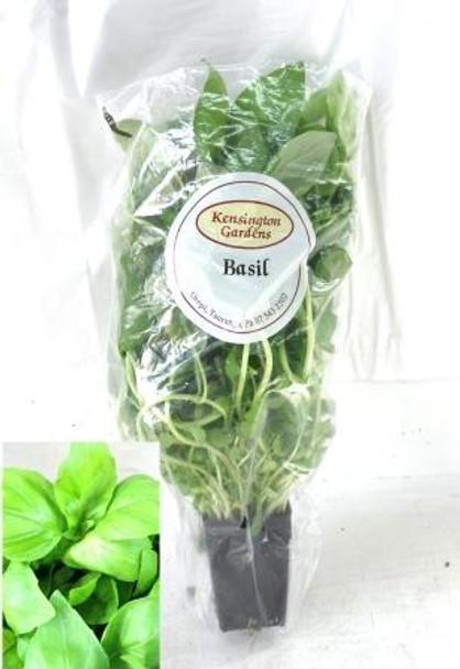 Basil - Living Herbs