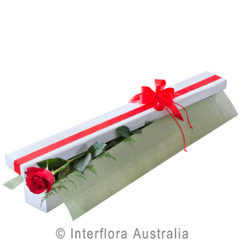 A Beautiful Romance selection of 1 Red Rose supplied by Ipswich Florist. Select Gifts to go with your selection. Ipswich Florist situated 9 Brisbane St Ipswich.