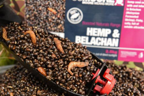 CC Moore New Hemp & Belachan 2.5kg Camou Bucket