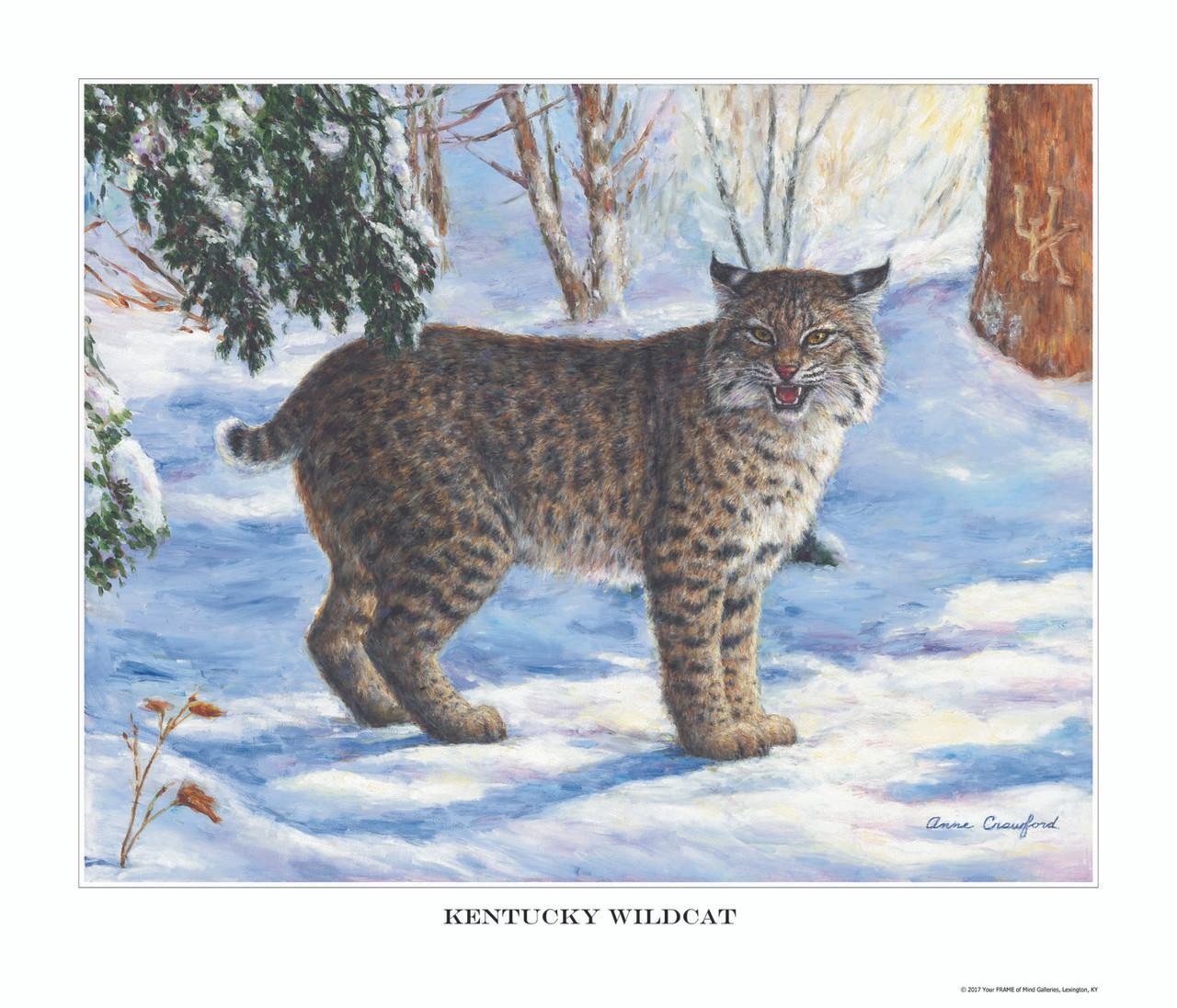 Kentucky Wildcat - Your Frame Of Mind Galleries