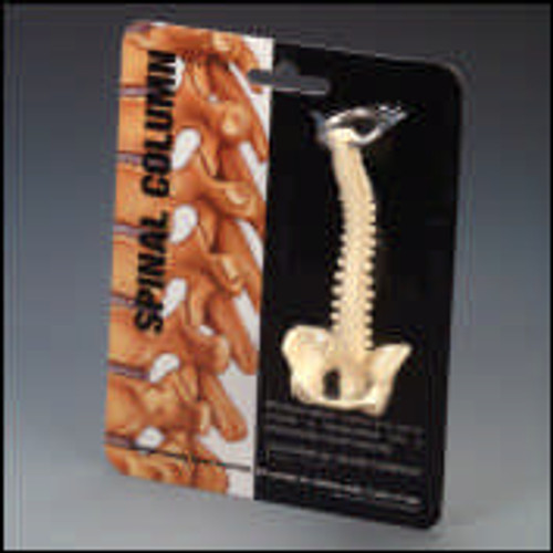 Minature Spine Key Ring ( Total of 6 Per pack)