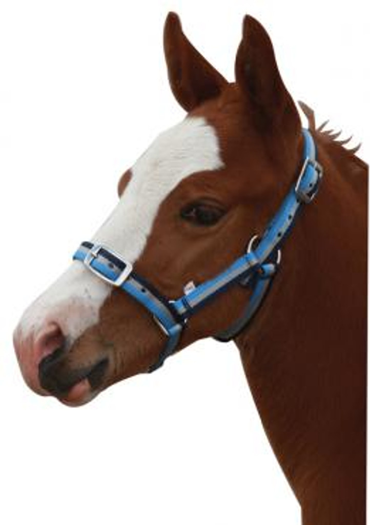 Foal Three Colour Halter (Blue/Grey/Black)