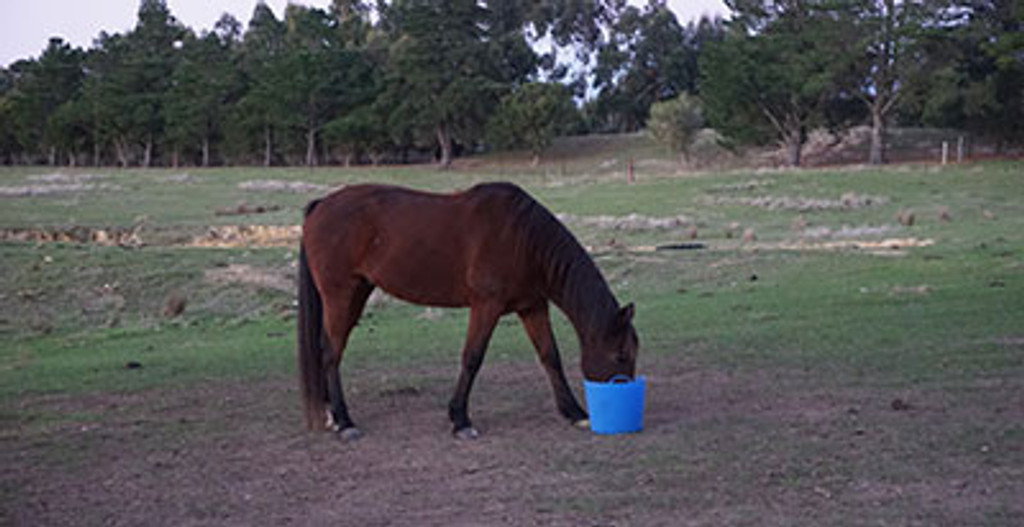 Top Tips For Maintaining Your Horses Condition Over Winter