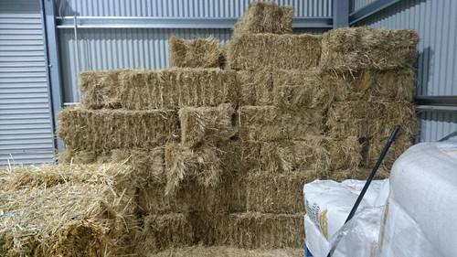 Grass Hay (Premium)