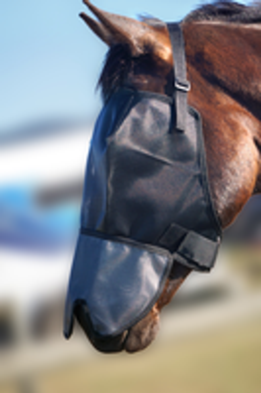 The ultimate guide to buying fly veils for horses (and why we recommend 'Flyveils By Design')