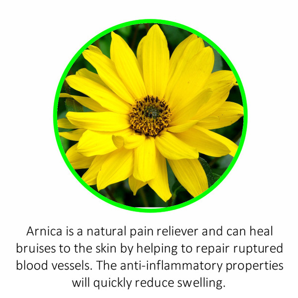 Arnica is a natural pain reliever and can heal bruises to the skin by helping to repair ruptured blood vessels. The anti-inflammatory properties will quickly reduce swelling.