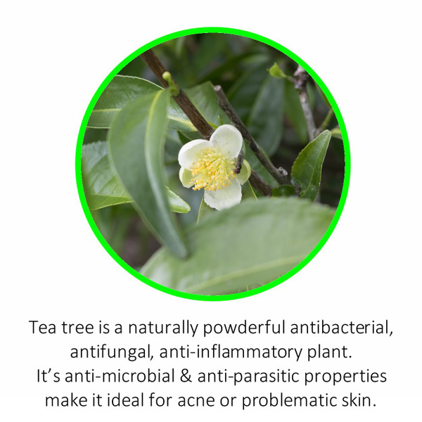 Tea tree is a naturally powderful antibacterial, antifungal, anti-inflammatory plant. It's anti-microbial & anti-parasitic properties make it ideal for acne or problematic skin.