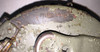 Original WW2 MG34/42 Basket Drum - LOW GRADE