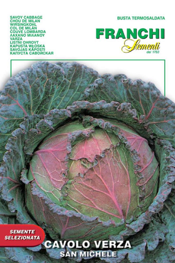 Cabbage San Michelle (33-15)