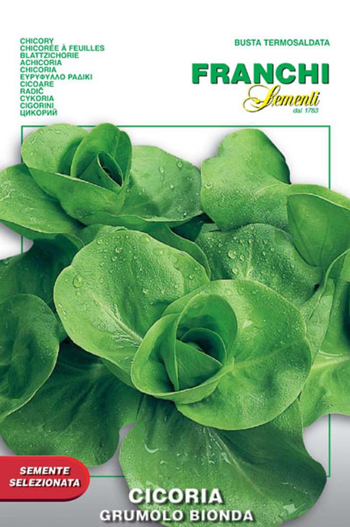 Chicory Grumolo Bionda (40-27)