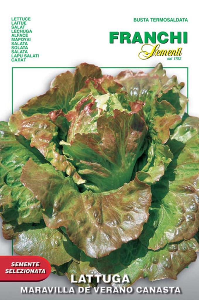 Lettuce Maravilla de Verano Canasta (79-72)