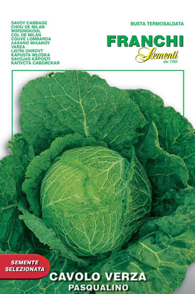Cabbage Savoy Verza  Pasqualino (33-1)