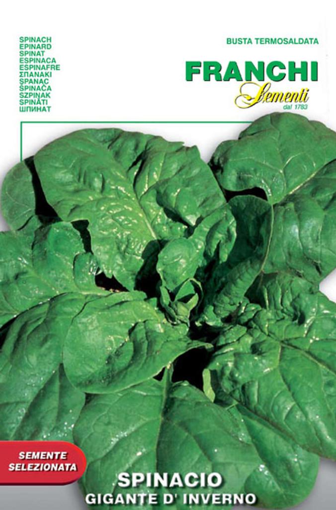 Spinach Gigante d'Inverno (127-9)