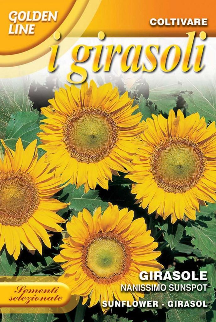 Sunflower Sunspot (329-3)