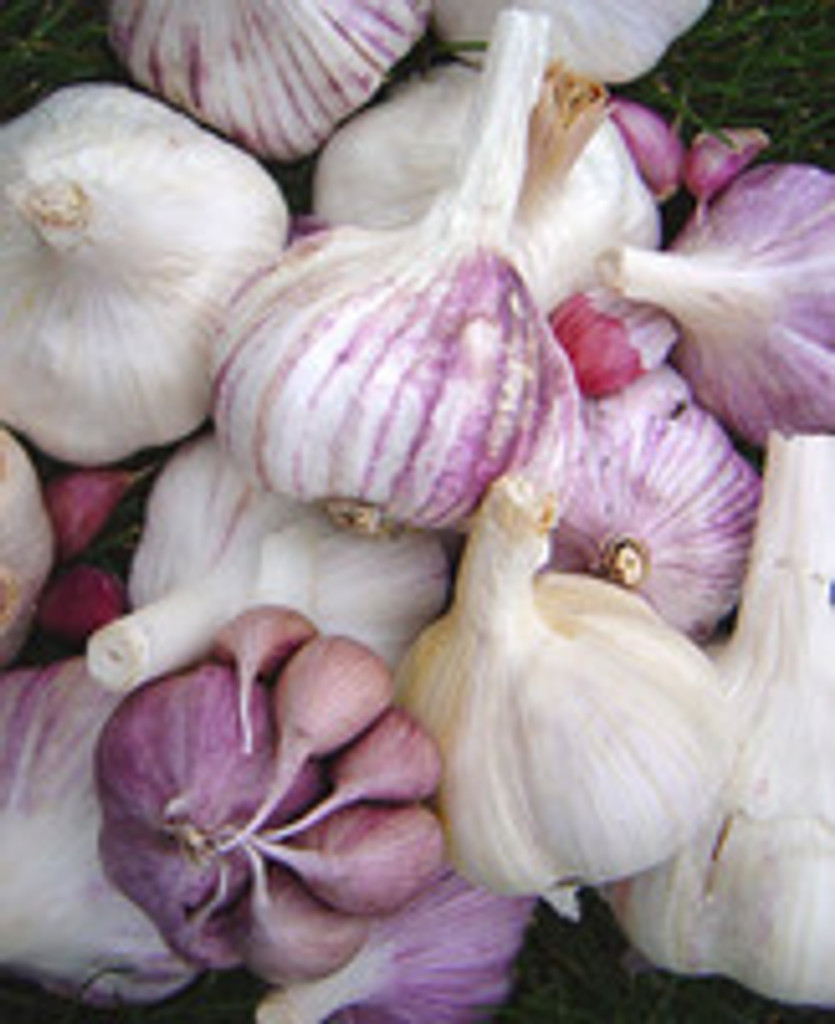 Why grow your own garlic? Here are 10 great reasons