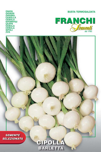Onion Barletta (42-1)