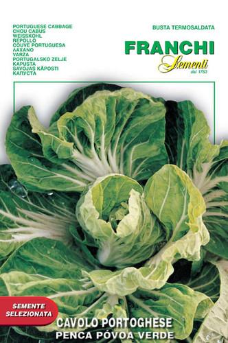 Cabbage Penca Povoa Verde (35-12)