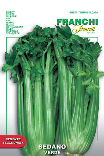 Celery Verde Pascal (124-6)