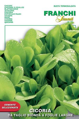 Chicory Bionda a Foglie Larghe (40-25)