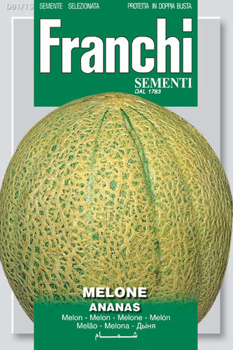 Melon Ananas Pineapple Melon (91-15)