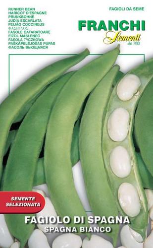 Bean Spagna Bianco (55-6ME)