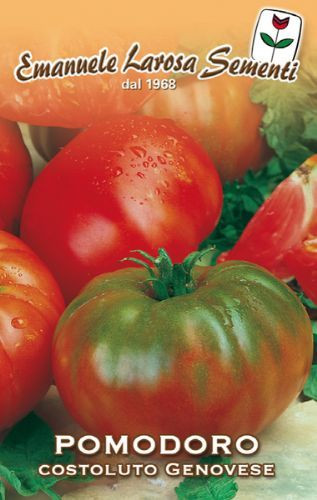 Tomato Costoluto Genovese sel Valente (106-283)