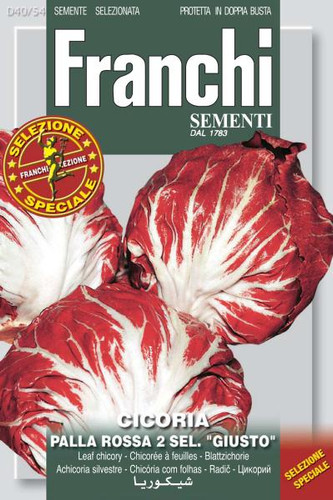 "Chicory Pall Rossa 2 Sel. ""Giusto"" (40-54)"
