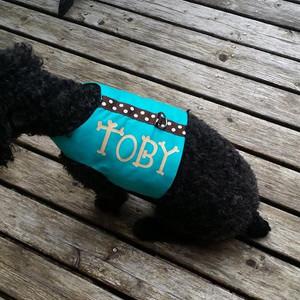 Toby wear Harness