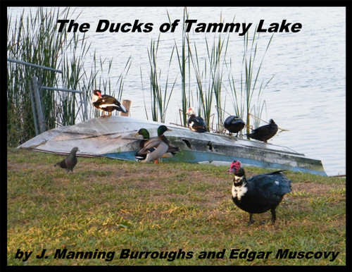 The Ducks of Tammy Lake