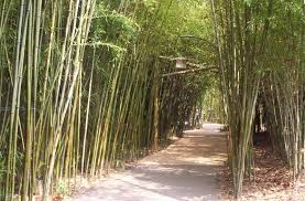 Image result for bamboo in zoos