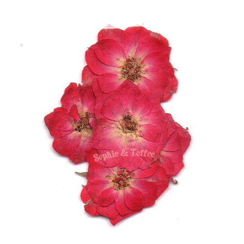 Rose Flower Pressed Real Dried Flowers (5 pieces)