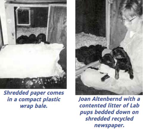 Puppy Bedding From Shredded Newspaper