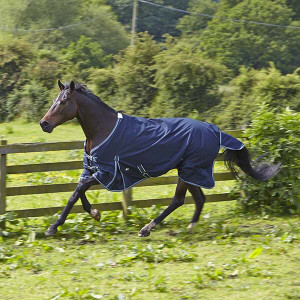 Elico Abberley No Fill Turnout Rug - Navy/Ice Blue