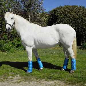 Rhinegold Elite Half Travel Boots - Set Of 4 - Turquoise
