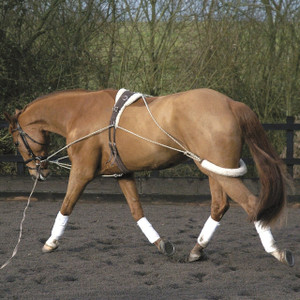 Essential Horse Training System