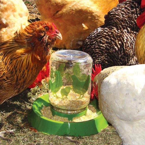 Chicken Feeder with Waterer