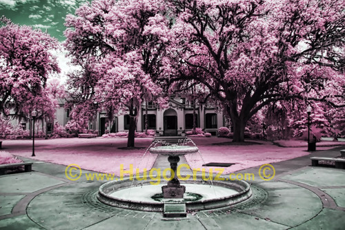 """Thomas Fountain"" ● Infrared Photography"