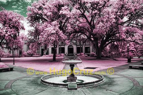"""Thomas Fountain"" ● Infrared Photography"
