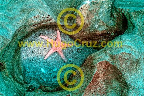 """Coquina Star"" - Infrared Art Photography"