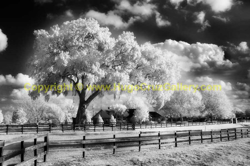 """The Sentinel"" ● Infrared Photography"