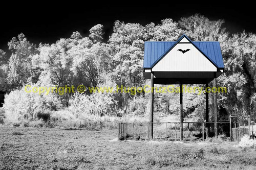 """""""The Bat House"""" ● Infrared Photography"""
